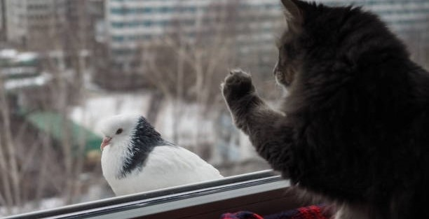 Why do cats chatter at birds, and what does this behavior mean?