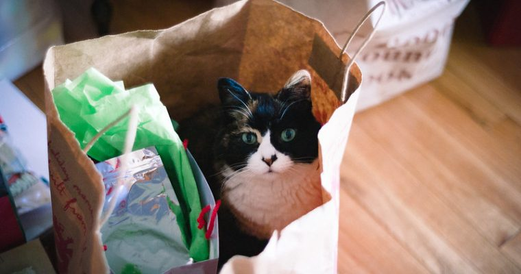 Best Gifts For Cat Lovers Ideas: 2021 Reviews