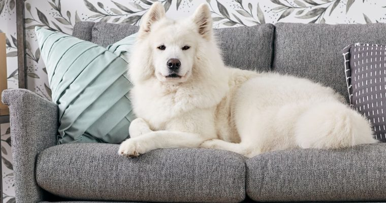 How To Keep Dog Off Couch: 5 Simple Steps To Stop Dog From Jumping On Furniture