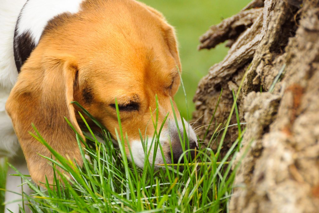 why do dogs eat plants