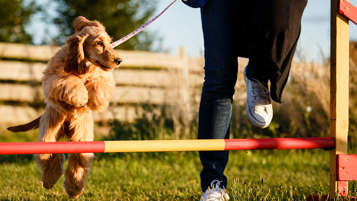 exercise your dog at home