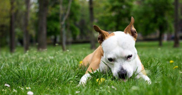 Why Do Dogs Eat Plants? Animal Behavior Explained
