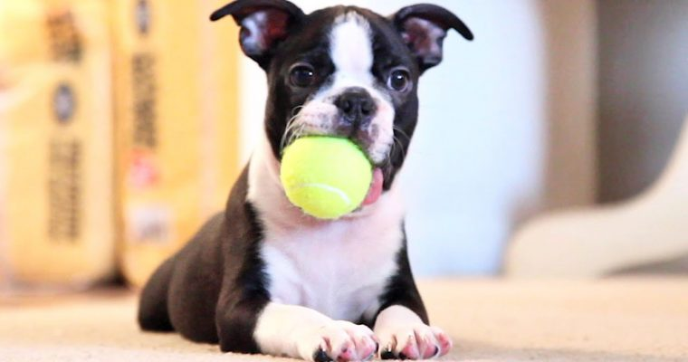 EXERCISE DOGS AT HOME – MUST-KNOWN TIPS & RECOMMENDATIONS
