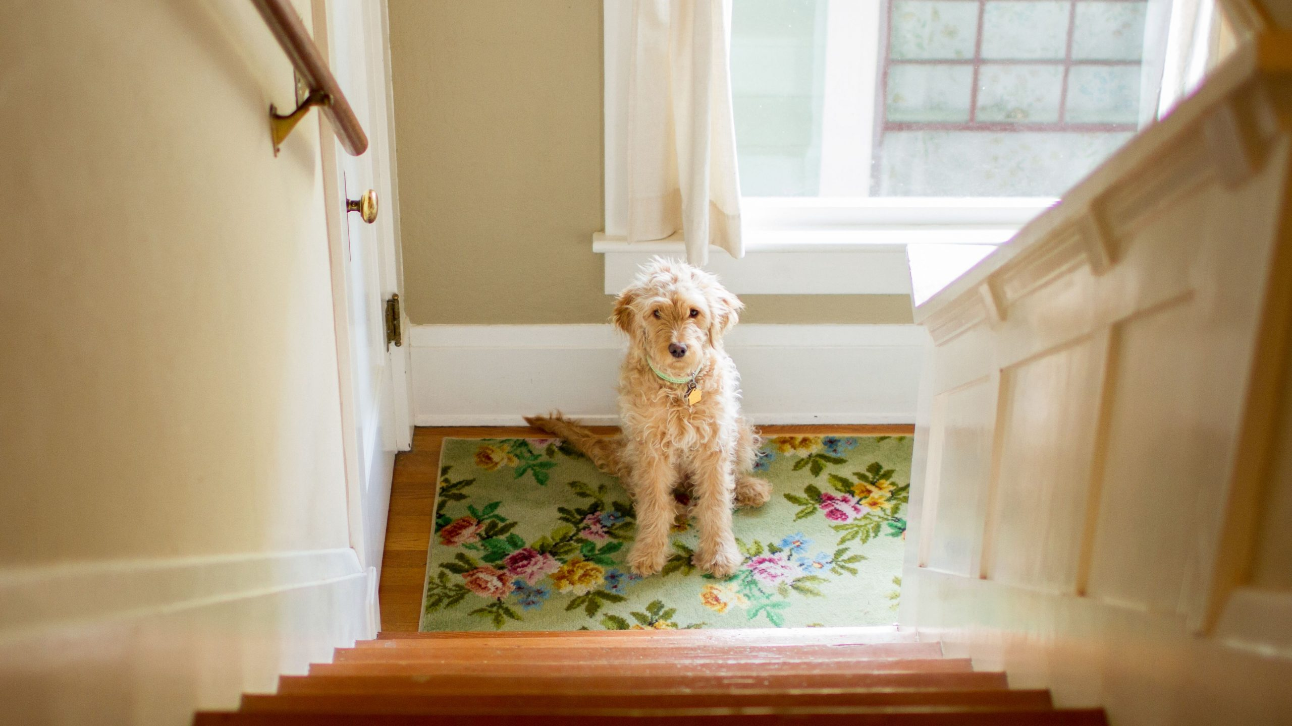 exercise dogs at home