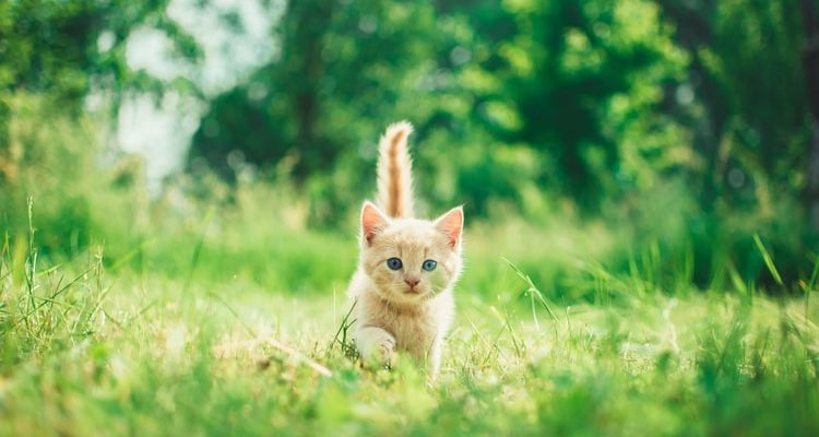 Why Are Cats' Noses Wet?